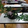 華道教室,石化柳のお生花が面白く生けられた