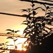 8/14 これは今朝の空 ここは撮れたけど