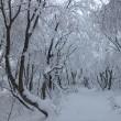 雪化粧をした野坂岳