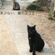 黒猫ジジィ&鯖トラしんちゃんのお出迎え
