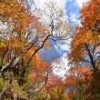 人知れず赤く染まりゆく樹々