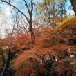 初冬・・京都を歩く