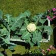 花と緑のふれあい展