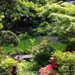 暑い春の一日ー明治神宮御苑から根津美術館庭園へー