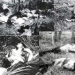 The Phong Nhi villagers killed by South Korean Marines