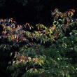 秋色と小鳥達