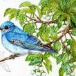 途中経過4 (エゴノキと青い鳥)