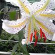 6月の花と嫁