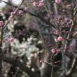 + 菜の花うどん・・・ 安部増税・姑息な内閣  皇室の終焉  日本もまた滅亡の運命にある