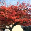 ご近所のお寺での紅葉