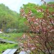 栂池自然園:北安曇郡小谷村
