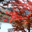 南湖の紅葉