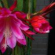 今日は「母の日」ですね。母に愛と感謝の日!!