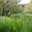 緑の絨毯が敷かれたブルーベリー畑