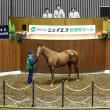 【ジェイエス・冬季繁殖馬セール2019(JS Company Winter Broodmare Sale)】の「上場馬一覧」が公開!