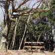 三峯神社へもう一度  (その5 )あ!豚のなる樹だ!