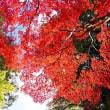 平林寺の紅葉 2017 その1(2017.11.16撮影)