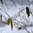 笹に花が咲き実が成る