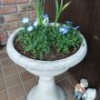 春の花花花
