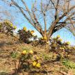 斜面に咲く春。
