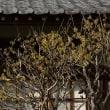 円覚寺~稲村ケ崎 撮影会(2/3)