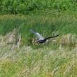 南の島の野鳥写真展開催中・・・(7日目)