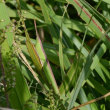 成東・東金食虫植物群落に行って来ました -2/2- (平成29年10月10日)。