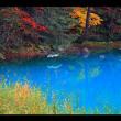 裏磐梯五色沼の紅葉(保存写真より)