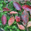 秋本番、どこもかしこも秋の色です♬