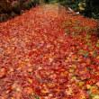 落ち葉の赤いじゅうたん