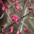 春の兼六園 ①