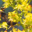 オオモクゲンジの花