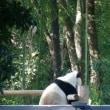 パンダ狂騒曲・シャンシャン見物記 その4・5 180421