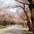 県内は花見の季節へ