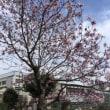 3/15(木) 卒業式 & またまた美味しんぼ散策続く 笑
