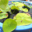 水彩 植物の緑