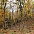 晩秋の森の中