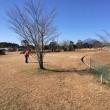 正月は宮崎でパークゴルフ、青島パークゴルフ場(宮崎)かかしの里パークゴルフ場(都城)「記録」