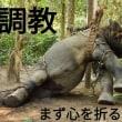 【参加者募集中】木下大サーカス名古屋公演前★啓発アクション!2019年3~6月 #動物サーカス反対