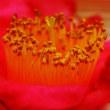 金沢の椿 椿展を見る