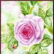 色鉛筆画411 (薔薇)