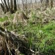 湧き水と湿地帯の花 動画