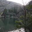@  世界中で日本にしかすんでいない野鳥:カヤクグリの姿 @ M池(岐阜県岐阜市)
