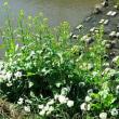 石津川から陶器川