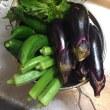 夕方に野菜もらいました。