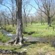 東北 山と出湯の旅 櫃取湿原