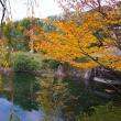 2017.11.10 豊島区 目白: 目白庭園の紅葉