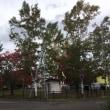 木が色付いてきた