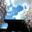 2018・3・23 東京の素敵な建造物 府中市・聖将山東郷寺の山門 しだれ桜が見事(^^)/