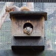 井の頭自然文化園 リスの小径